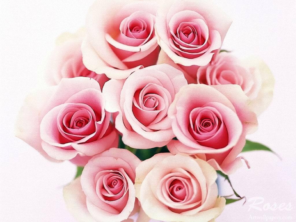 ... cho giống hồng lai hồng nhung và những giống hồng quý